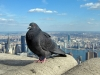 new-york-2012-die-erste-169