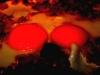bratpfannen-eierakt-klein