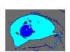 die-belugas-maus-macht-blau